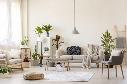 Een grote kamerplant maakt je woonkamer helemaal af